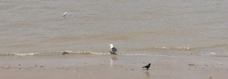 Oiseaux en mer Photos stock