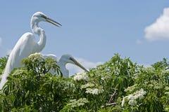 Oiseaux en nature photo libre de droits