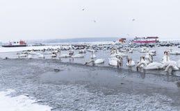 Oiseaux en rivière congelée avec les bateaux emprisonnés en glace Image libre de droits