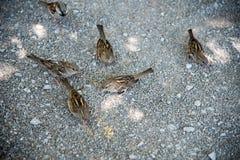 Oiseaux en Suisse Images stock