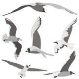 Oiseaux en vol illustration de vecteur