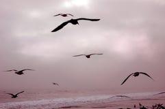 Oiseaux en vol Photos libres de droits