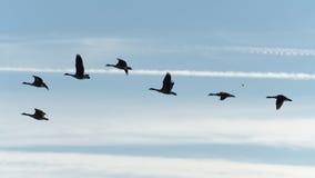 Oiseaux en vol Photographie stock libre de droits