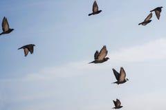 Oiseaux en vol Images stock