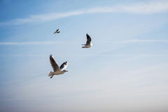 Oiseaux en vol image stock