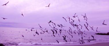 Oiseaux en vol au-dessus de l'océan Photos stock