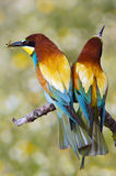 Oiseaux enamourés Photographie stock