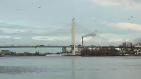 Oiseaux entourant dans le pont câble-resté ci-dessus de ciel banque de vidéos