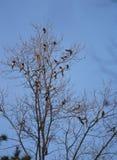 Oiseaux et arbre Images stock