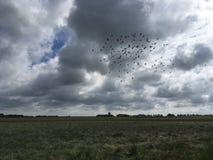 Oiseaux et champ Photographie stock libre de droits