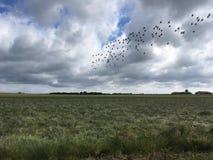 Oiseaux et champ Photo stock