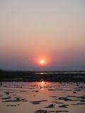 Oiseaux et le coucher du soleil Images libres de droits