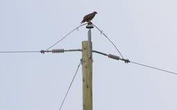 Oiseaux et lignes électriques Photos libres de droits