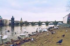 Oiseaux et logement Photos stock