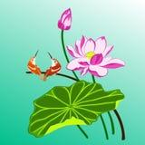 Oiseaux et lotus Photo libre de droits