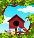 Oiseaux et maison d'oiseau sur l'arbre Image stock