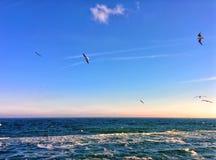 Oiseaux et mer Photos libres de droits