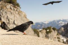 Oiseaux et montagnes Images libres de droits