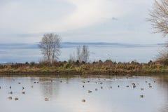 Oiseaux et nature image stock