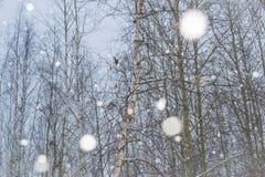Oiseaux et neige photographie stock libre de droits