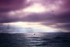 Oiseaux et nuages Image libre de droits