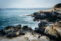 Oiseaux et otaries sur des roches le long de l'océan pacifique, en La Joll Images stock