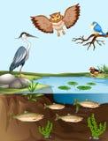 Oiseaux et poissons par l'étang illustration libre de droits
