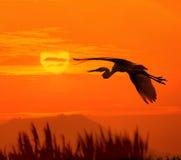 Oiseaux et soleil Images libres de droits