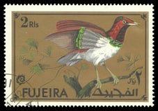 Oiseaux exotiques, le Roi Bird du paradis photos libres de droits