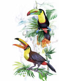 Oiseaux exotiques sauvages d'aquarelle sur des fleurs Photo stock