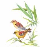 Oiseaux exotiques sauvages d'aquarelle sur des fleurs Photographie stock libre de droits