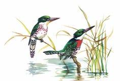 Oiseaux exotiques sauvages d'aquarelle sur des fleurs illustration stock