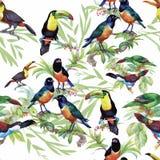 Oiseaux exotiques sauvages d'aquarelle sur le modèle sans couture de fleurs sur le fond blanc Photo stock