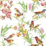 Oiseaux exotiques sauvages d'aquarelle sur le modèle sans couture de fleurs sur le fond blanc Images libres de droits