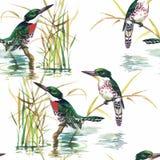 Oiseaux exotiques sauvages d'aquarelle sur le modèle sans couture de fleurs sur le fond blanc Photographie stock libre de droits