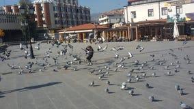 Oiseaux fâchés et un garçon Photos libres de droits