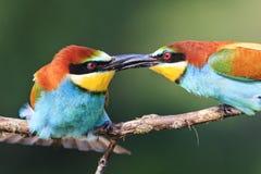 Oiseaux fermes de poignée de main Images stock