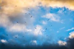 Oiseaux fonctionnant de la tempête Images libres de droits