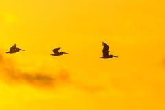 Oiseaux heureux Photo libre de droits