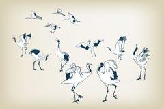 Oiseaux japonais de vecteur de croquis d'oiseau de grue de danse illustration libre de droits