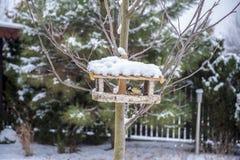 Oiseaux jaunes et chardonneret de mésange mangeant la graine du conducteur en bois d'oiseau en hiver Photos libres de droits