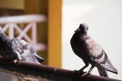 Oiseaux malades étés perché sur le pont image stock