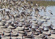 Oiseaux marins image libre de droits
