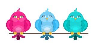 Oiseaux mignons colorés se reposant sur une branche Photo libre de droits