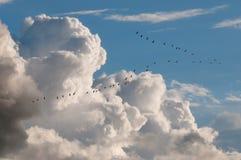 Oiseaux migrateurs Images stock