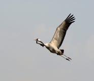 Oiseaux migrateurs au-dessus de lac de nature à l'automne Image libre de droits