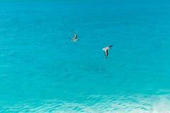 Oiseaux migrateurs sur l'île tropicale Image stock