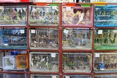 Oiseaux mis en cage dans Souq Waqif photos libres de droits