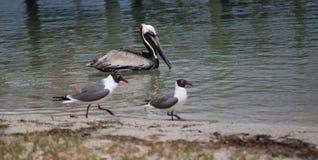 oiseaux nageant Images stock