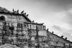 Oiseaux noirs et blancs se reposant sur une maison en pierre Images libres de droits